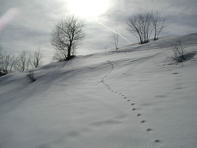 Sun Snowfall Tree Footprint