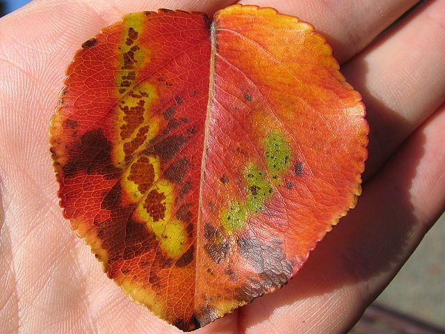 Shadows of Fallen Leaves - Love Short Story