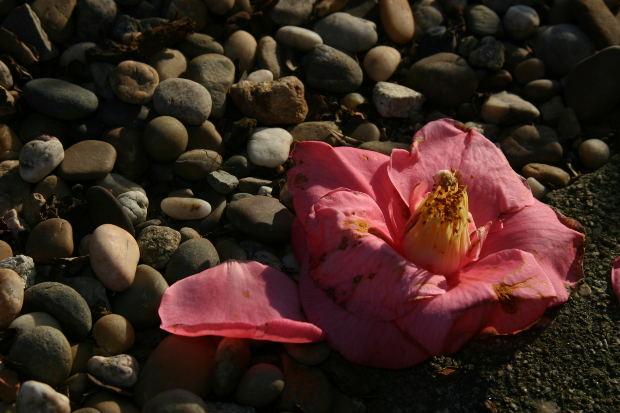 dry-flower-stones
