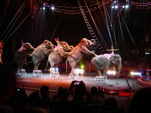 elephants-circus-short-story-kids