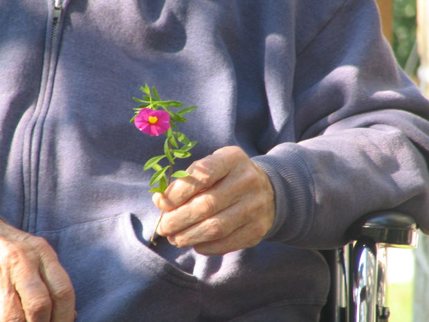 Old Man with Flower in Hand on Wheelchair