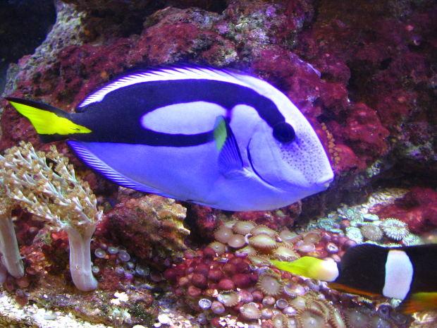 fish-blue-aquarium