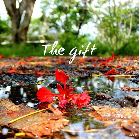 gift-gulmohar-poinciana-flower