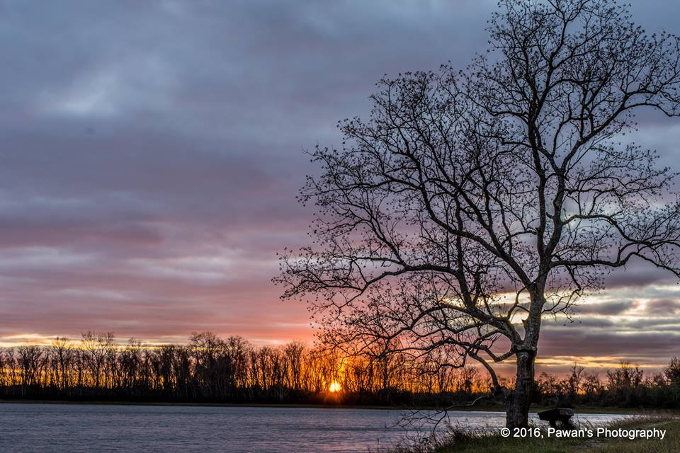 Sun-set-Tree